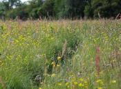 Wildlife Trusts Fancott Meadows
