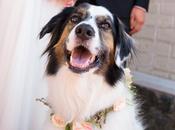 Wedding Photo Contest