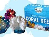 Create Your Colorful Coral Home with Little Passports' Reef Kit!