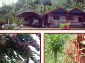 Blissful Technology-Free Weekend: Gatikallu Homestay, Chikmaglur, Karnataka [#MondayBlogs]