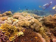 Balicasag Island, Panglao: Extraordinary Marine Diversity Beyond Compare