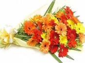 Choosing Flowers Newborn