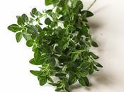 Drying Fresh Garden Herbs