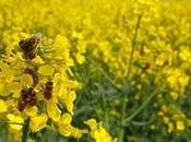 Banned Pesticides Pose Greater Risk Bees Than Thought, Experts Warn