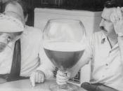 Wine Wit: Taster