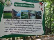 Athirappilly Falls…Paradise Disguise!!!!