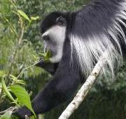 Featured Animal: Monkey