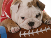 Dogs Star Super Bowl
