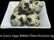 Prefer Giving Quail Eggs Over Chicken Reasons
