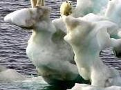 Does Climate Change Affect Biodiversity