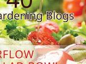 Tomato King Been Featured Edible Gardening Blogs,