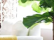 Great Indoor Plants Consider!