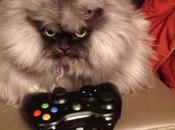 Nerdy Xbox Fanboy Cats