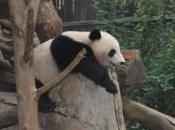 Panda, #1238