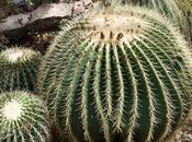 Various Desert Plants