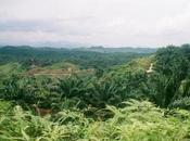 Who's Responsible Palm Deforestation—Small Farmers Companies? Equation