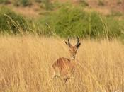 Gone Wild: Week Pilanesberg