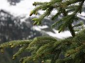 Coniferous Forests: Location, Temperature, Precipitation, Plants Animals