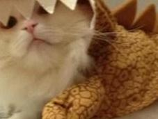 Prehistoric Dinosaur Cats (Dinocats)