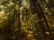 Deciduous Forests: Location, Temperature, Precipitation, Plants Animals