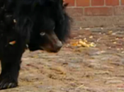 Black Bear Becomes Unlikely Friend with