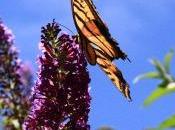 Butterflies Decline Coldwater Farm