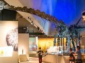 Kong Chian Natural History Museum