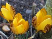 Garden Bloggers Bloom 2012