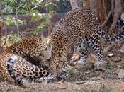 Nandankanan Zoological Park, Rajarani Temple Konark
