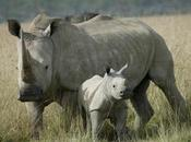 2015 Poaching Stats: What They Mean?