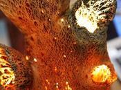 Alive Organic- Sciatu Lamp
