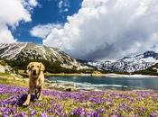 Pet-Friendly Vacation Destinations Continent