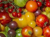 Event: Sydney Tomato Festival Royal Botanic Garden