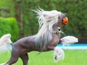 Equestrian Dogs That Look Like Horses