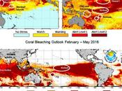 Human Hothouse Spurs Longest Coral Die-Off Record
