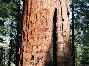 Roadtrips Sequoia/Springville