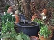 Dressing Garden