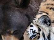Bear, Lion Tiger Become Inseparable Trio After Sharing Traumatic Past