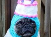 Party Time Dogs Celebrating Birthdays
