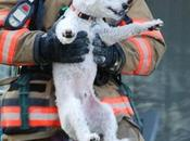 Puppy Breaks into Toothy Grin After Being Rescued from Apartment Fire