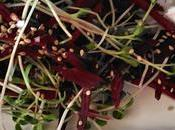 Roasted Beets Micro Green Salad