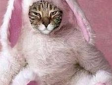 Award Winning Cats Easter Costumes