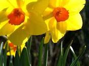 April, Breaks Garlic Planting