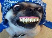 Dentist Hating Dogs With False Teeth