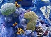 Tremendous Ways Save Coral Reefs From Destruction