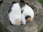 Sleepy Cats Sleeping Unusual Places