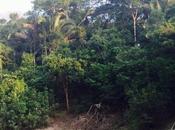 Surviving Amazon Jungle Part Enduring