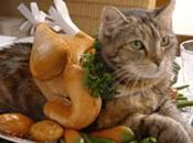 Tasty Cats That Look Like Foods