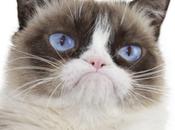 Saudi Cleric: Posing Photos With Cats Forbidden