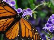Agreement Turns I-35 into Pollinator Haven Finance Commerce
